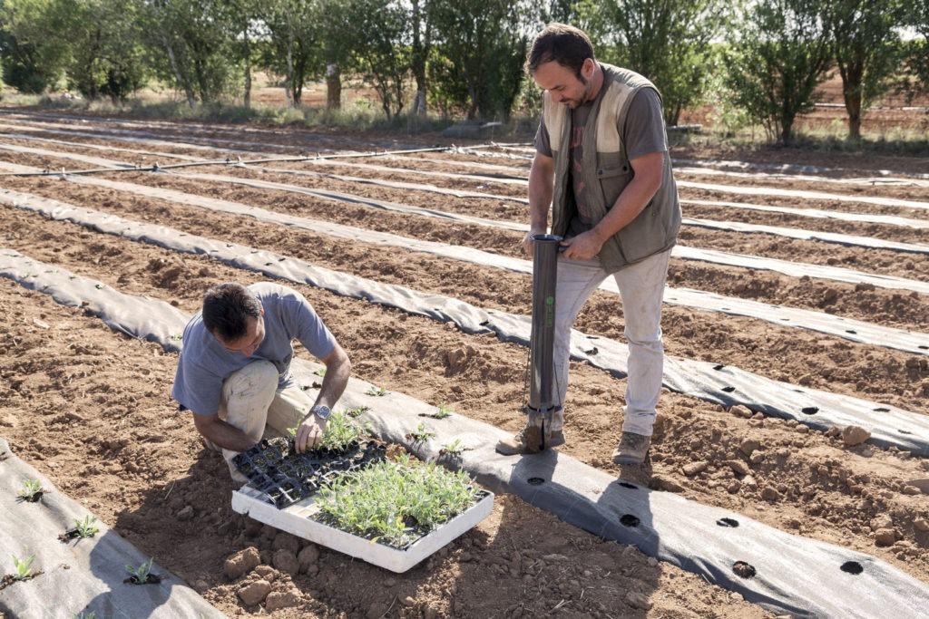 Bepflanzung des Testgeländes in Spanien