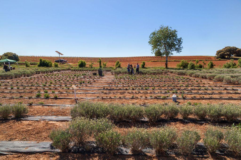 Nachhaltigkeit: Nokian Tyres bepflanzt Test-Areal in Spanien
